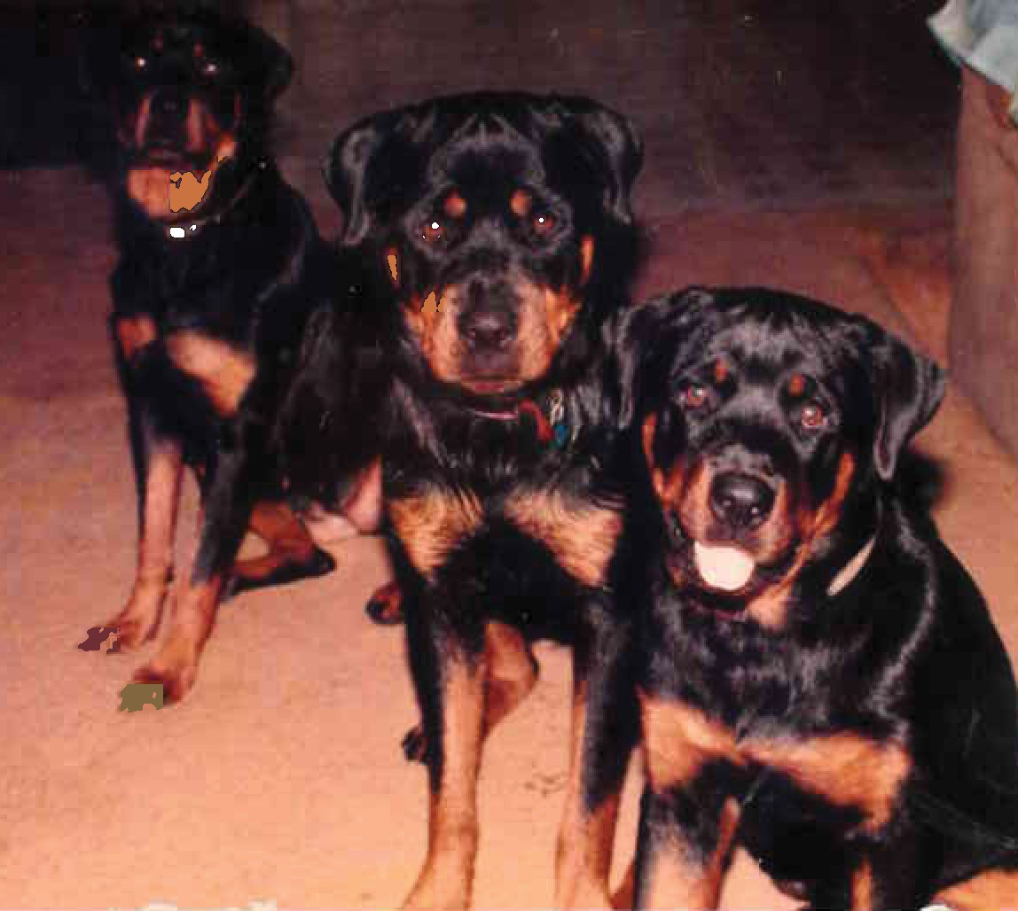 Rottweilers Magic, Major and Draco  at the bird ranch
